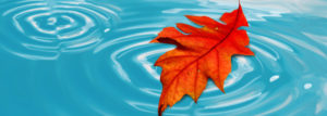 4 Alternatives on How to Deal with the Leaves Falling Into Your Pool